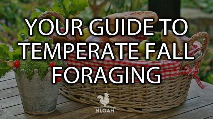 temperate fall foraging cover