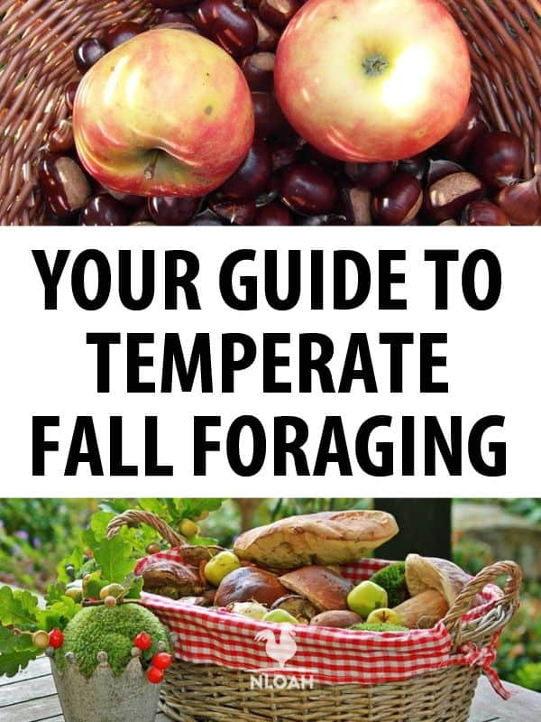 temperate fall foraging pinterest