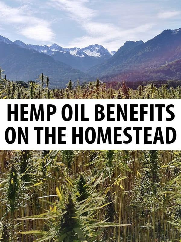 hemp oil pinterest