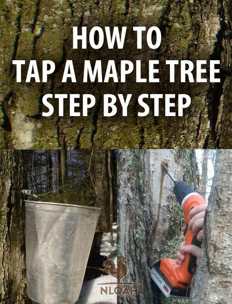 maple tree tapping pin