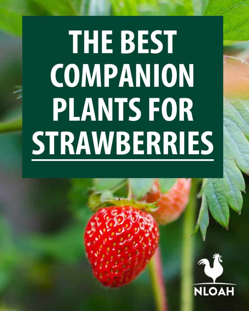 companion plants pinterest