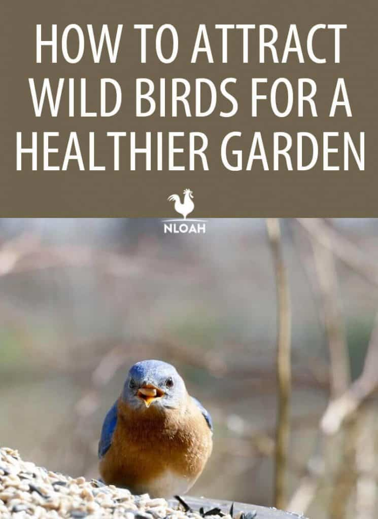 attracting wild birds pinterest