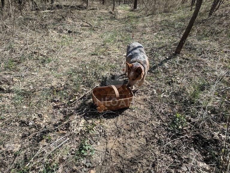 dog next to basket on pasture