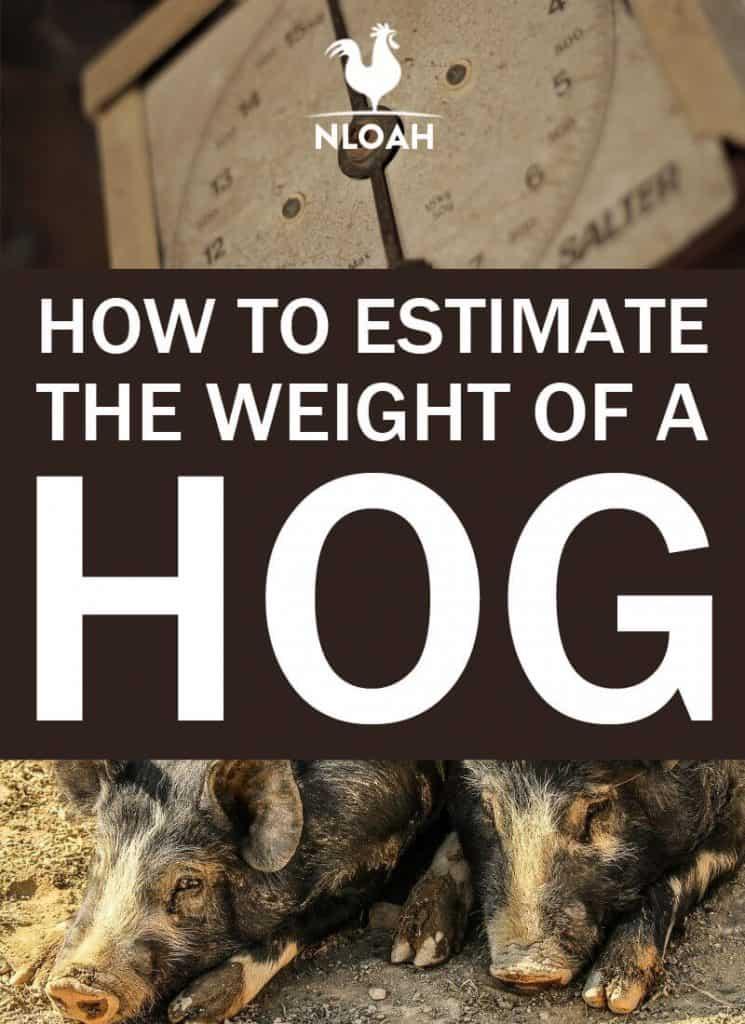 estimate hog weight pinterest