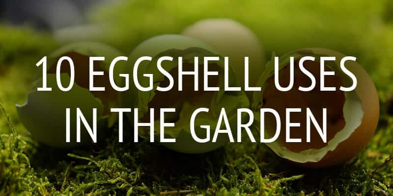 garden eggshell uses featured