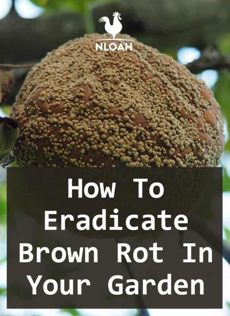 brown rot pinterest
