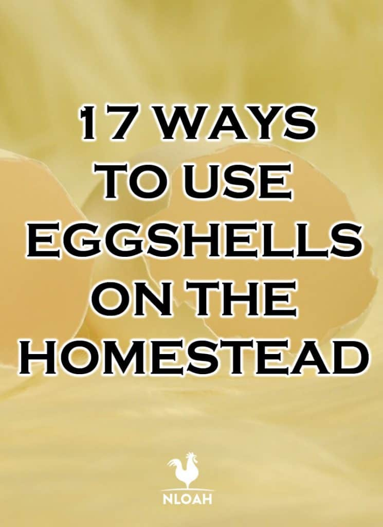 eggshell homestead uses pinterest