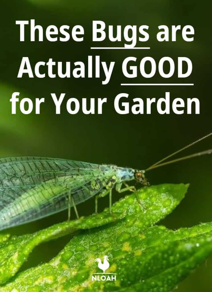good bugs pinterest