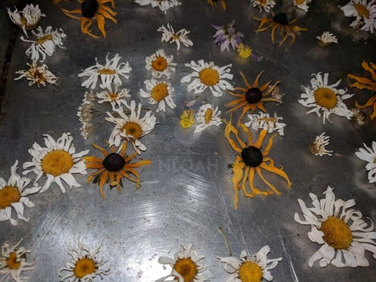 How to Dry Flowers in the Oven