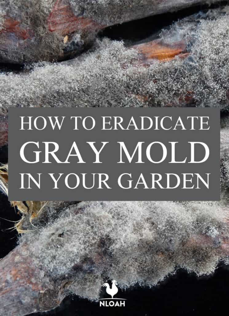 gray mold pinterest