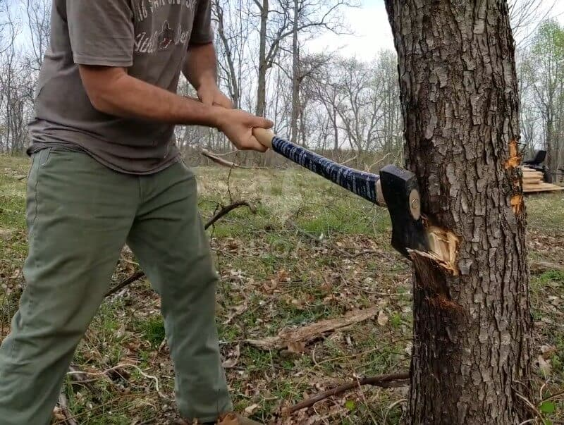using the axe to fell the tree