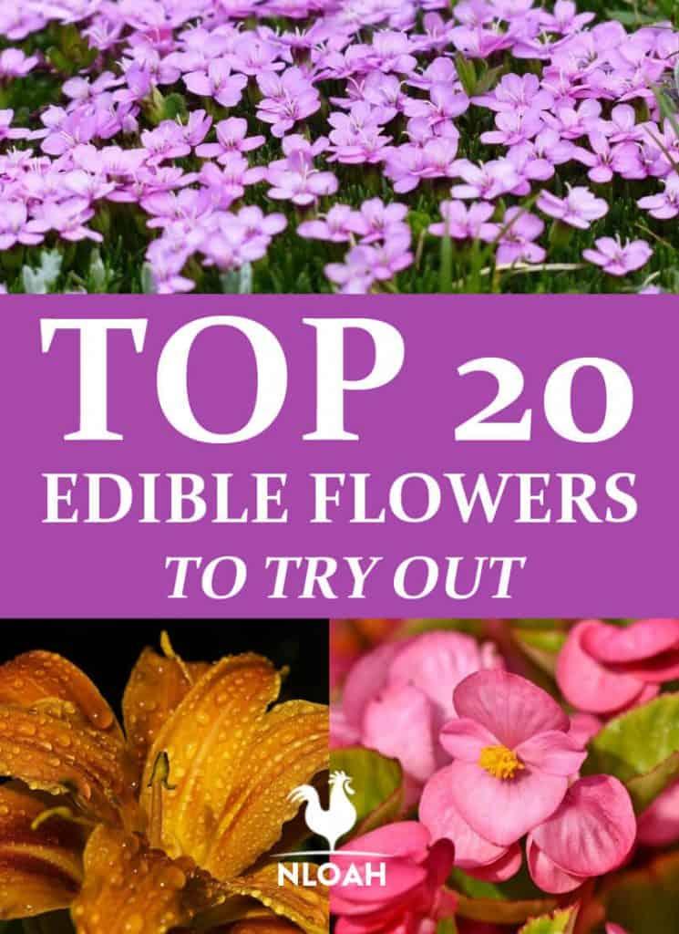 edible flowers pinterest