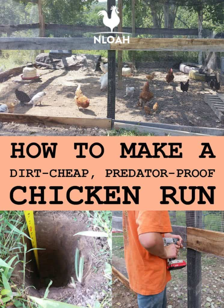 chicken run pinterest image