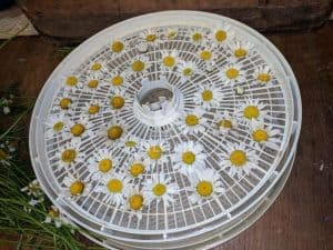 dehydrate flower filled tray
