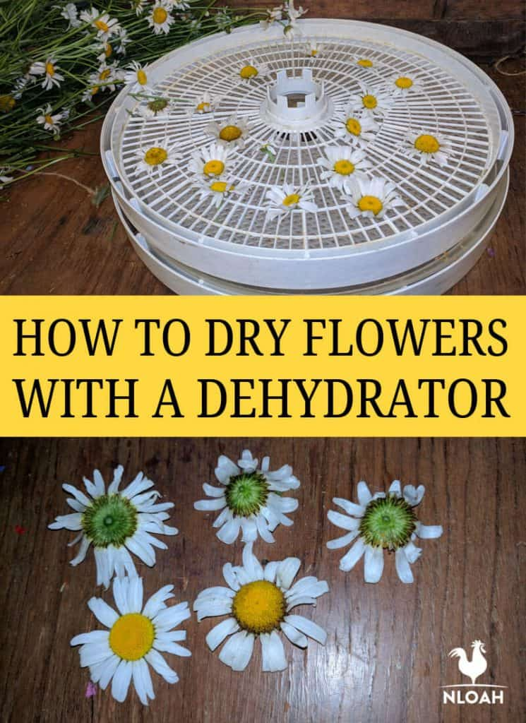drying flowers with dehydrator