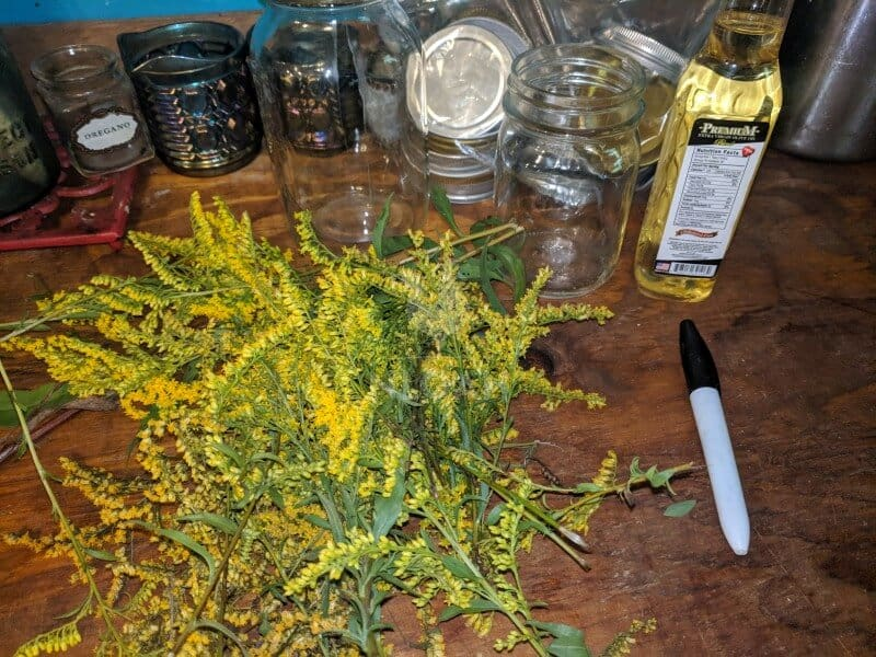 goldenrod infused oil ingredients