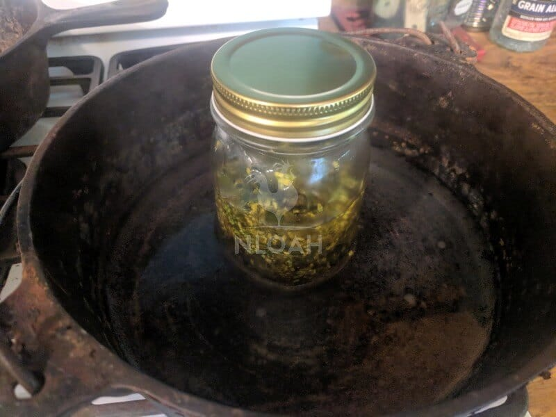 goldenrod infusion