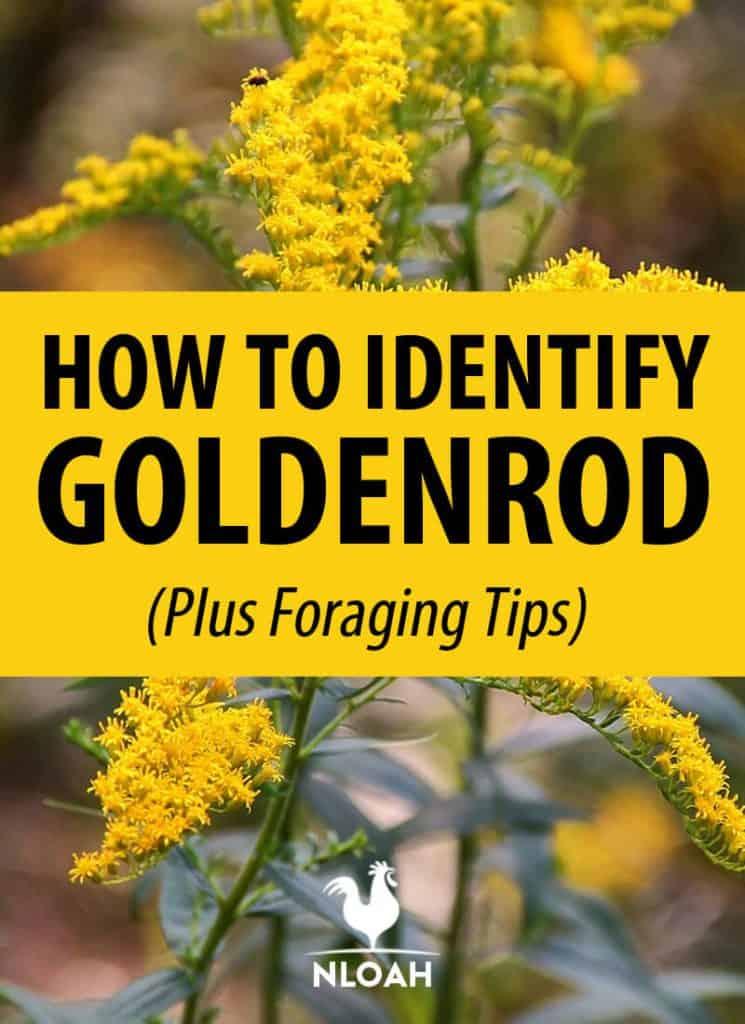 goldenrod identification pin