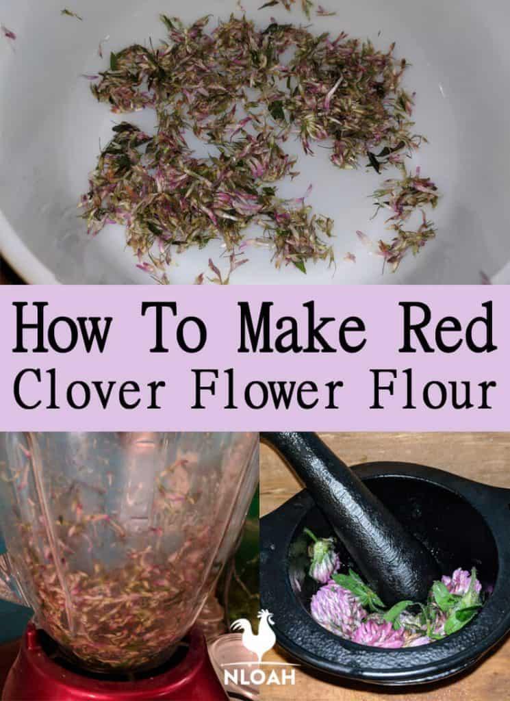 red clover flour pinterest