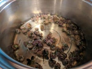 red clover flower heads boiling