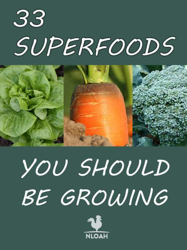 superfoods Pinterest