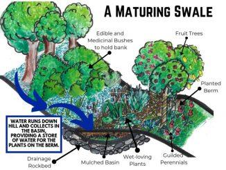 swale diagram