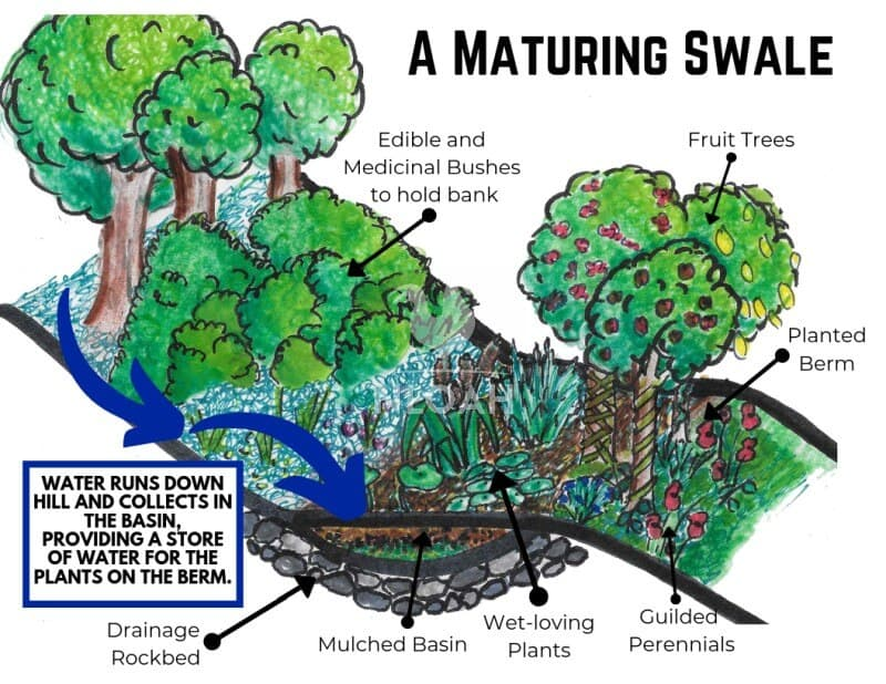 swale diagram