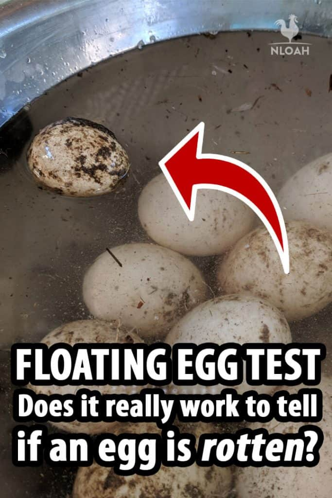 floating egg test Pinterest image