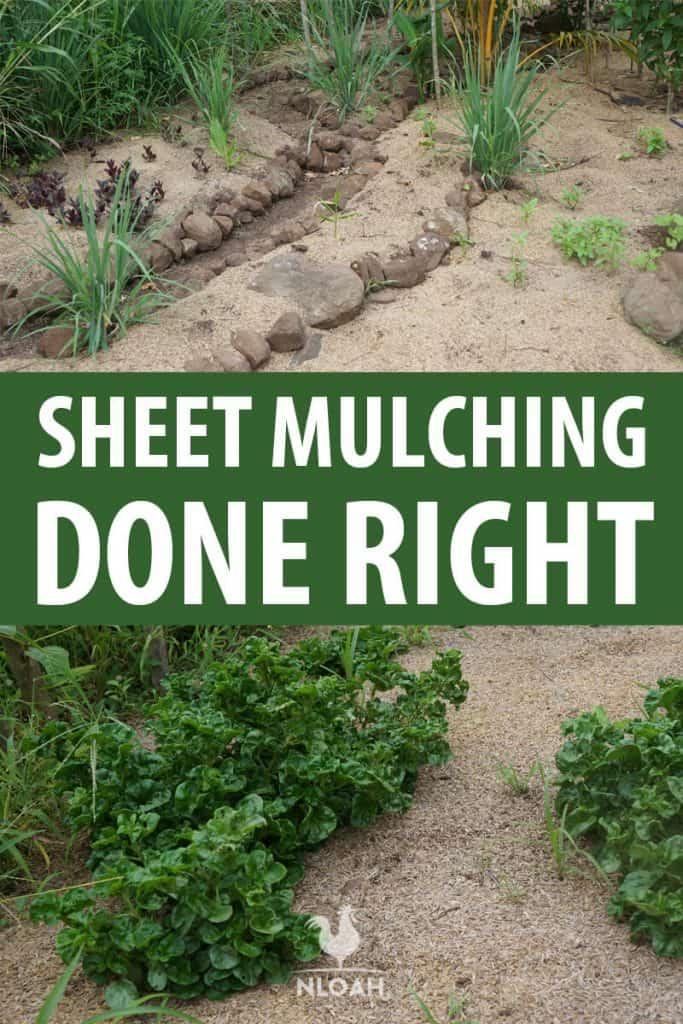 sheet mulching Pinterest image