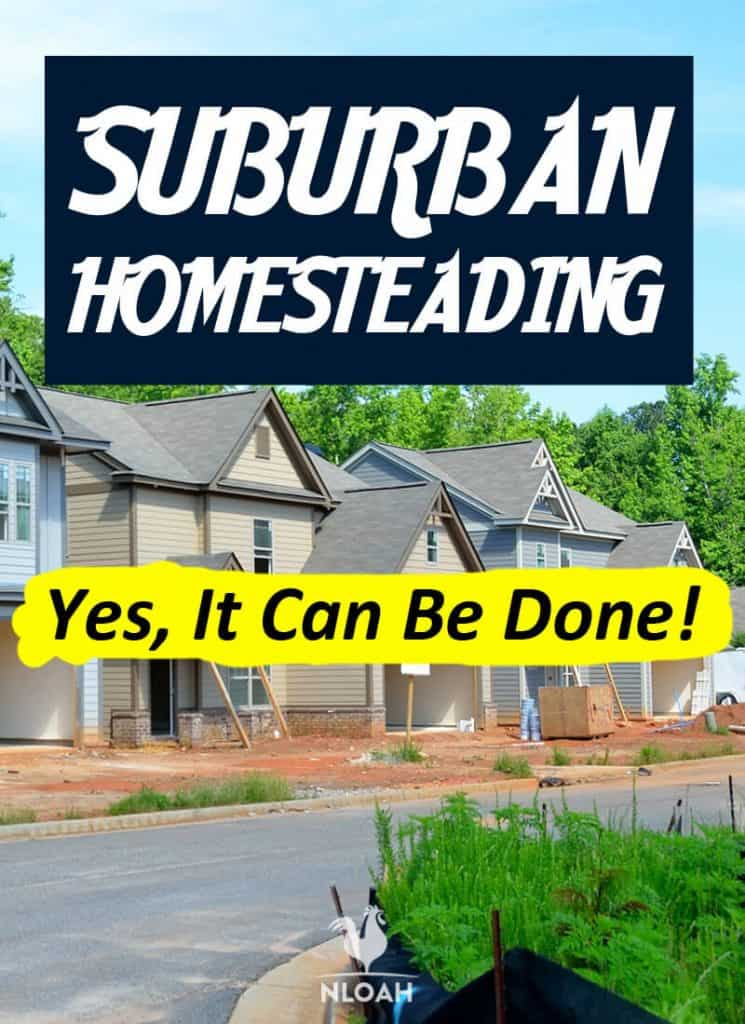 suburban homesteading Pinterest image