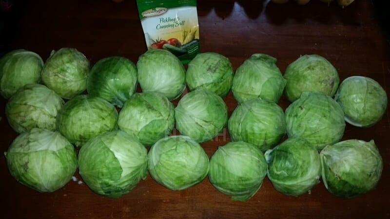 cabbage and salt