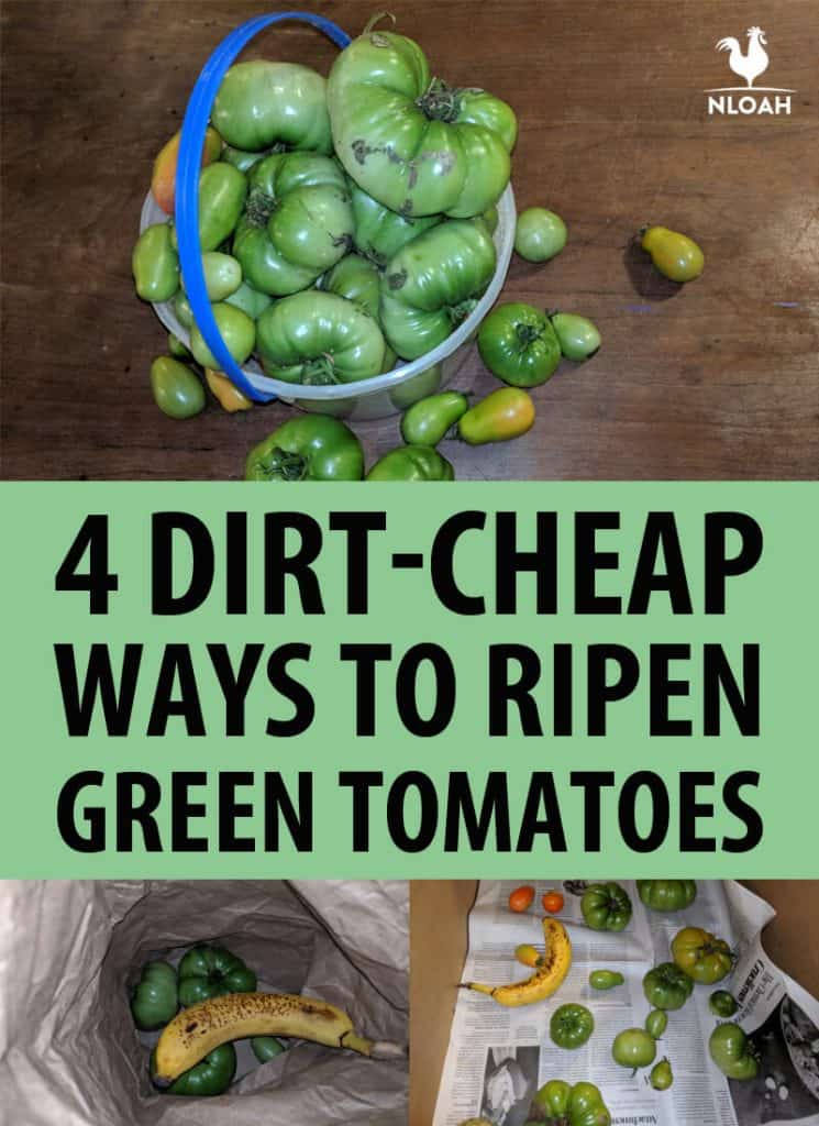 ripening green tomatoes Pinterest