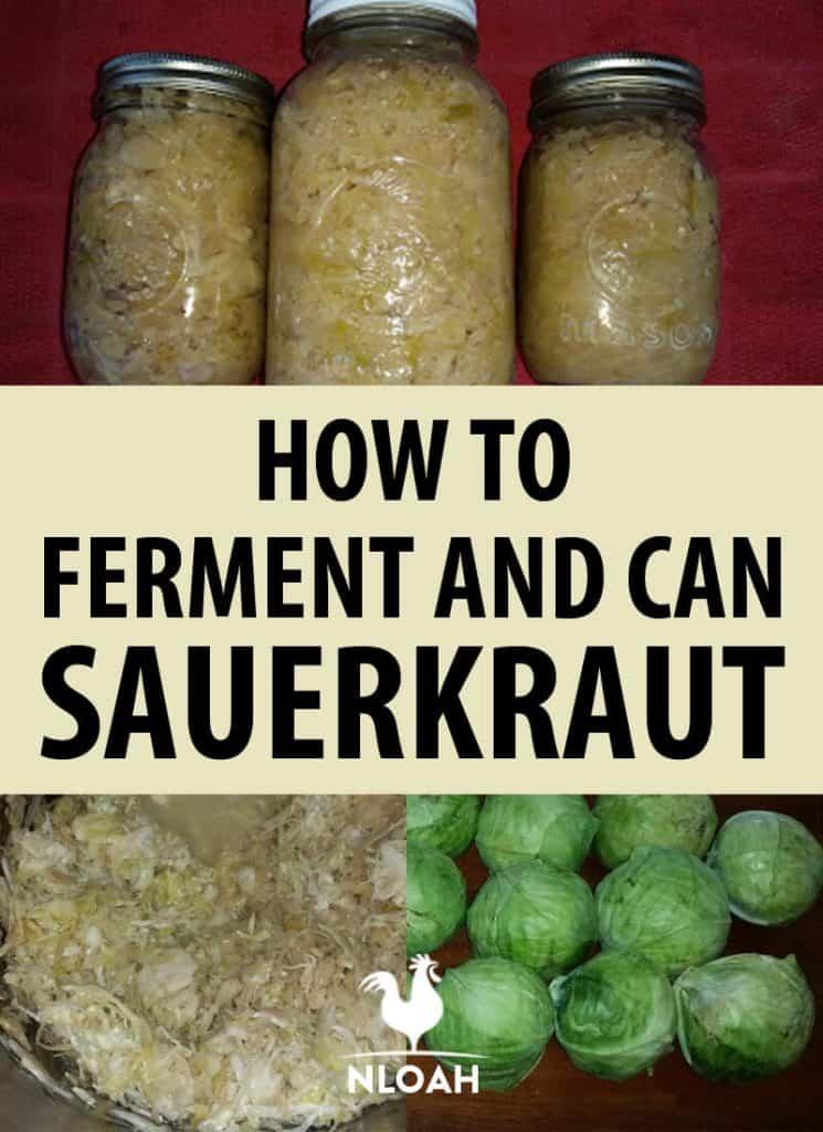 sauerkraut Pinterest image