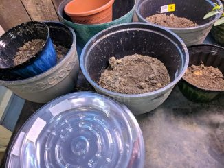 containers with potting soil