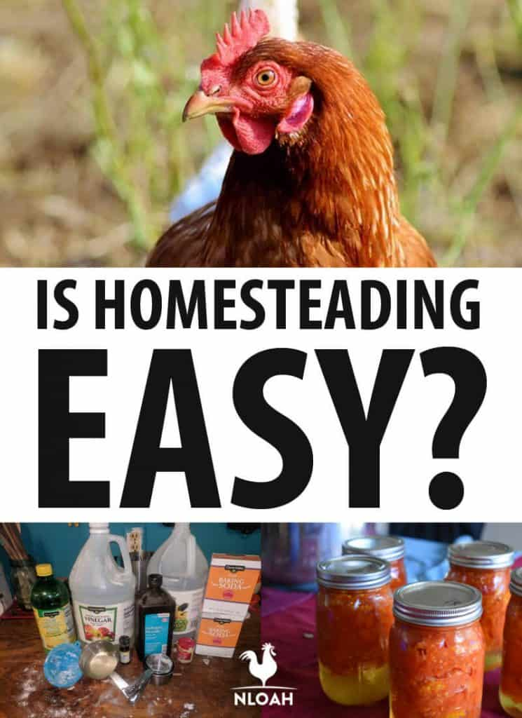 is homesteading easy pinterest