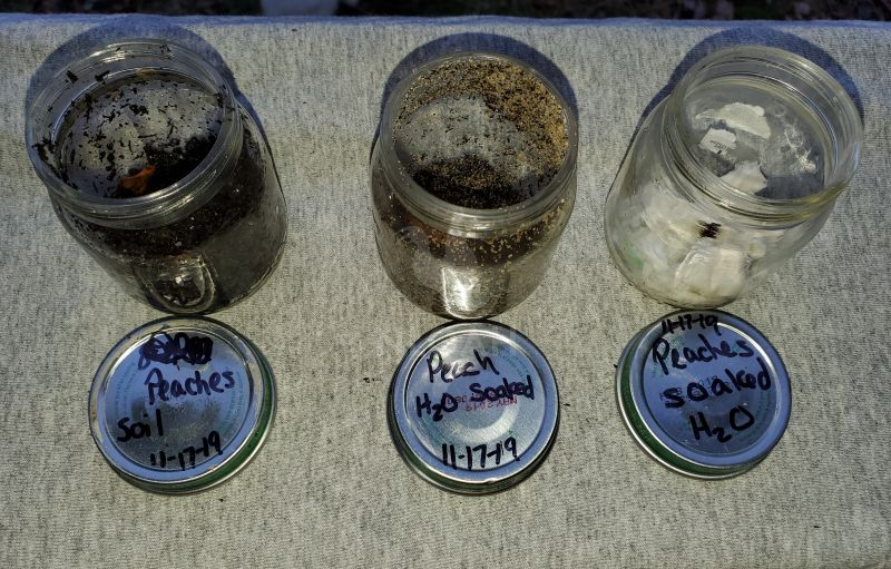 stratifying peach seeds using 3 different methods