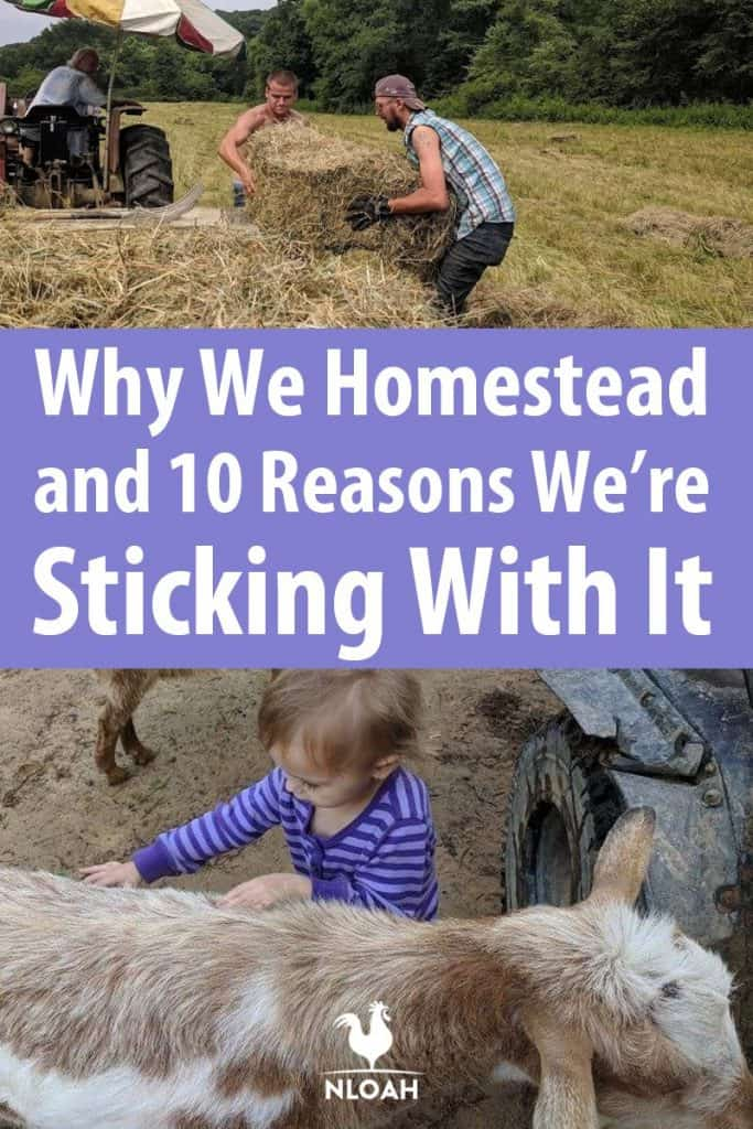 reasons to homestead pinterest image