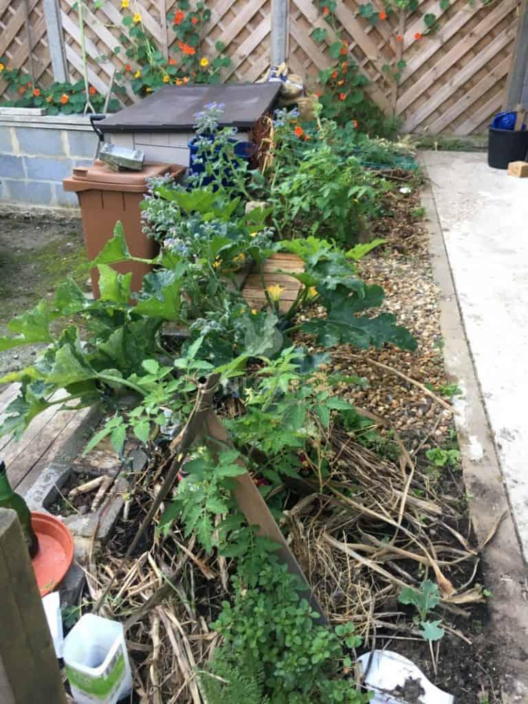 guild Oregano, Tomato, Squash, Pea, Broccoli, Nasturtiums, Brussels