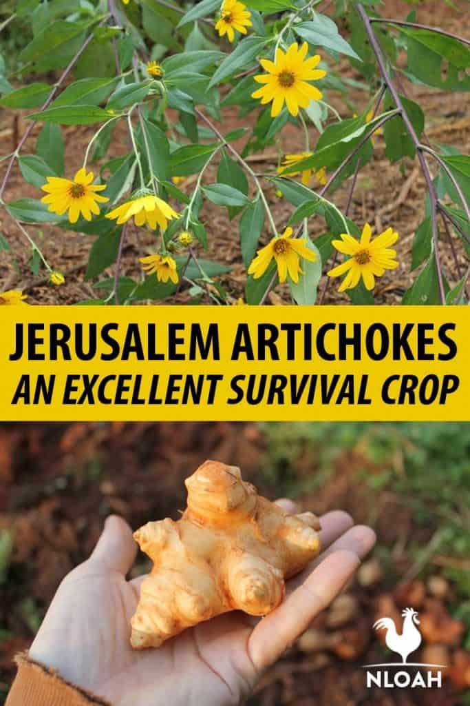 Jerusalem Artichokes pin