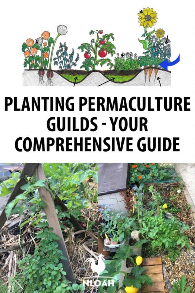 permaculture guilds Pinterest image
