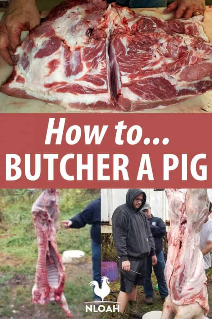 pig butchering pinterest