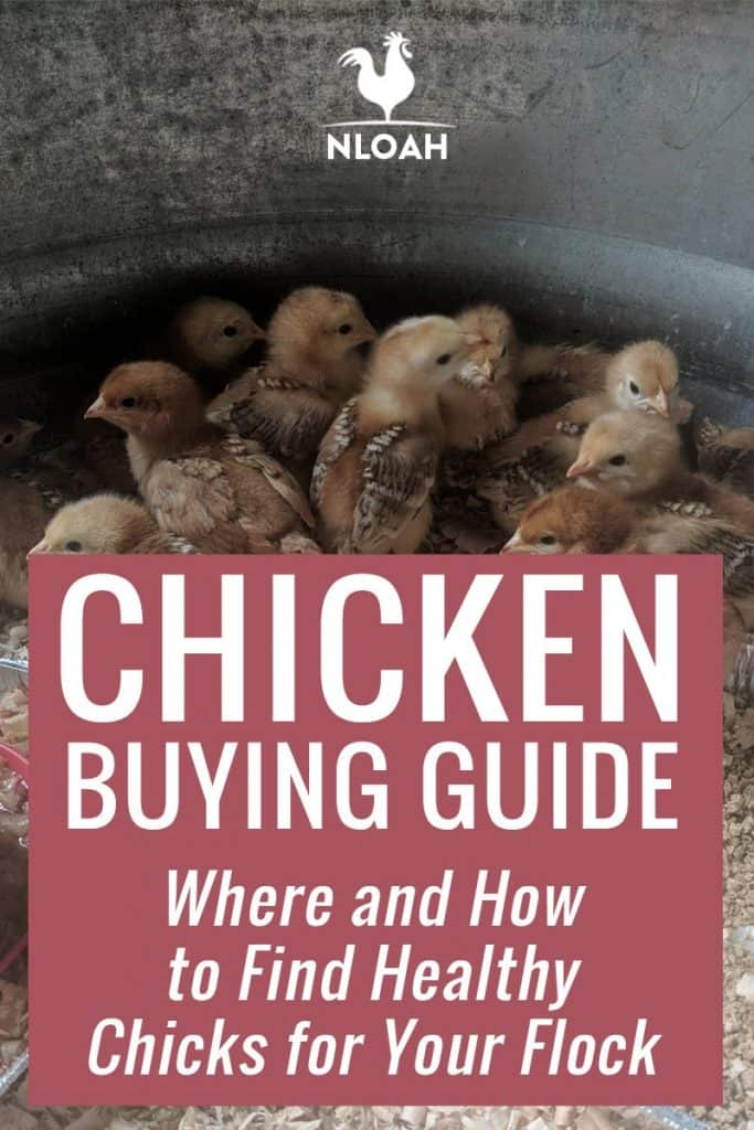 chicken buying guide Pinterest