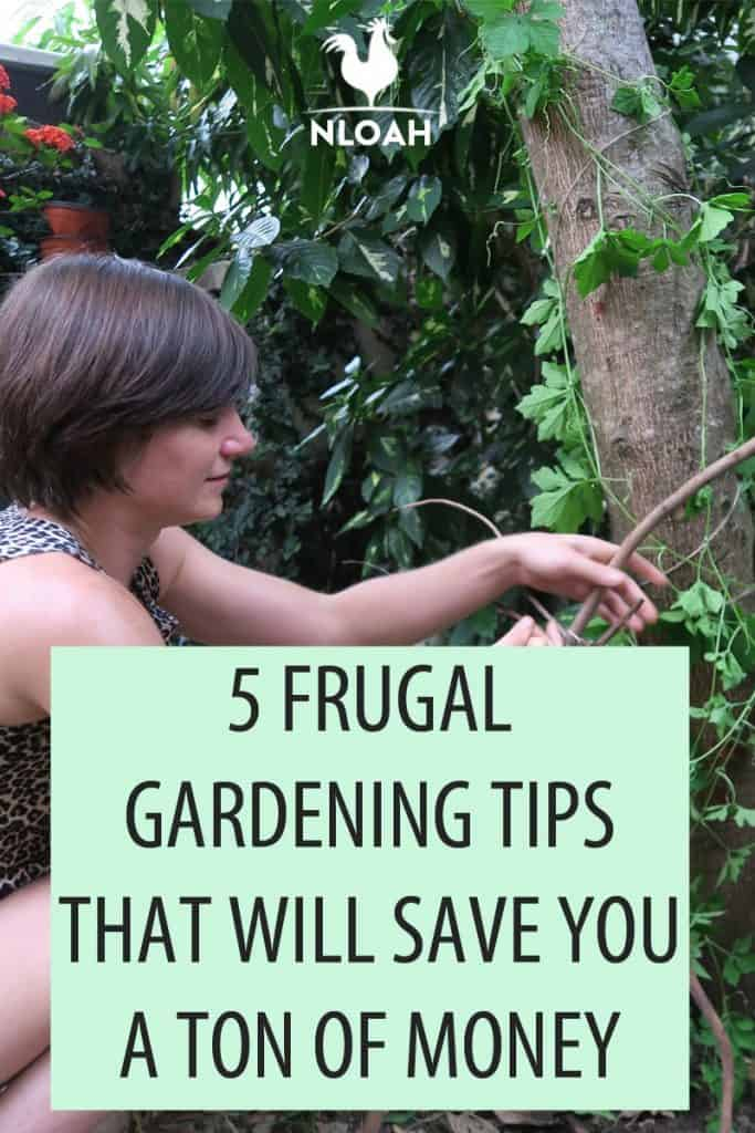frugal gardening tips Pinterest image