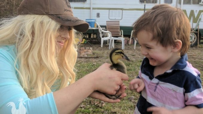 little boy versus duckling