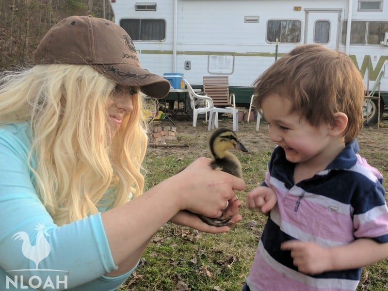 little boy versus duckling shown by his mom