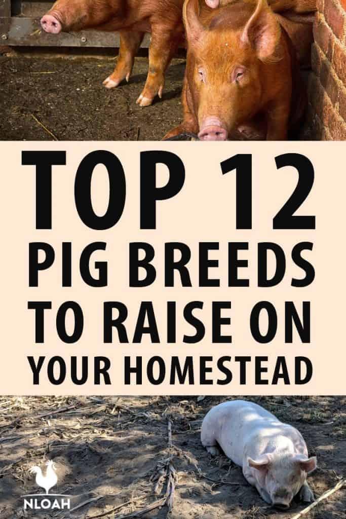 top pig breeds