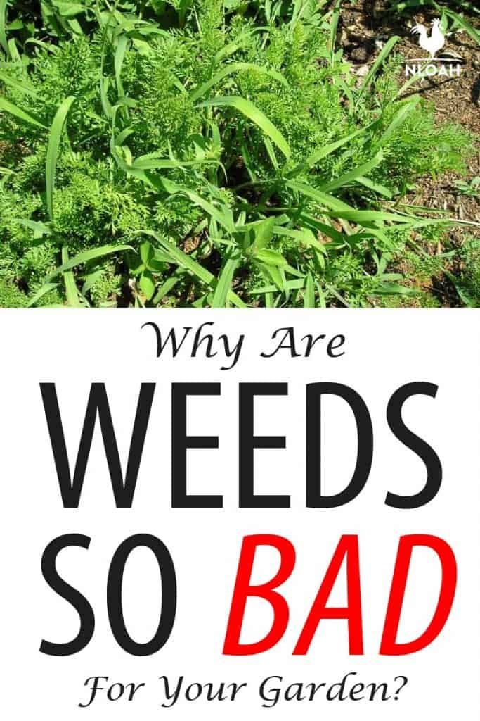 bad weeds Pinterest