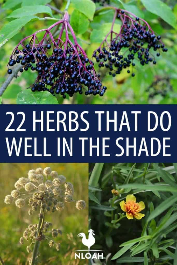 shade herbs Pinterest