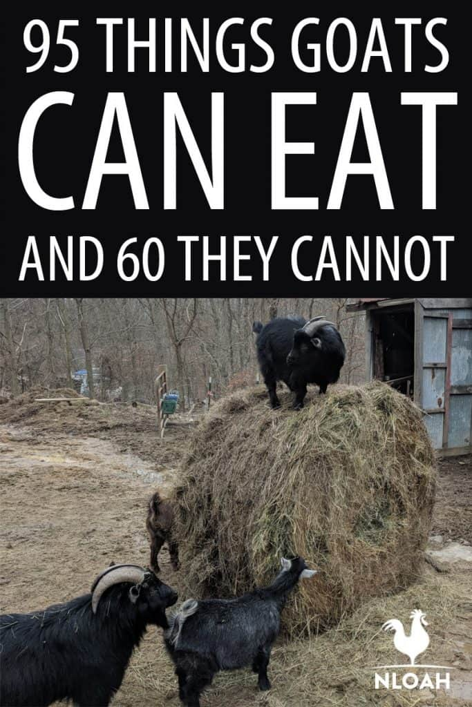 what goats can eat pinterest