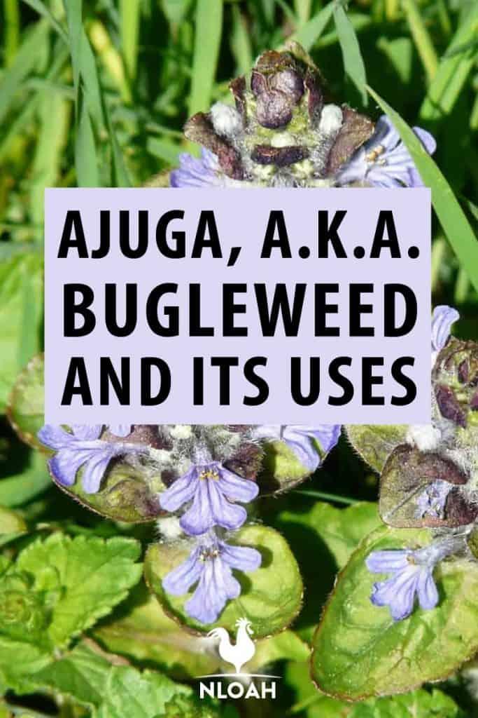bulgurweed pin